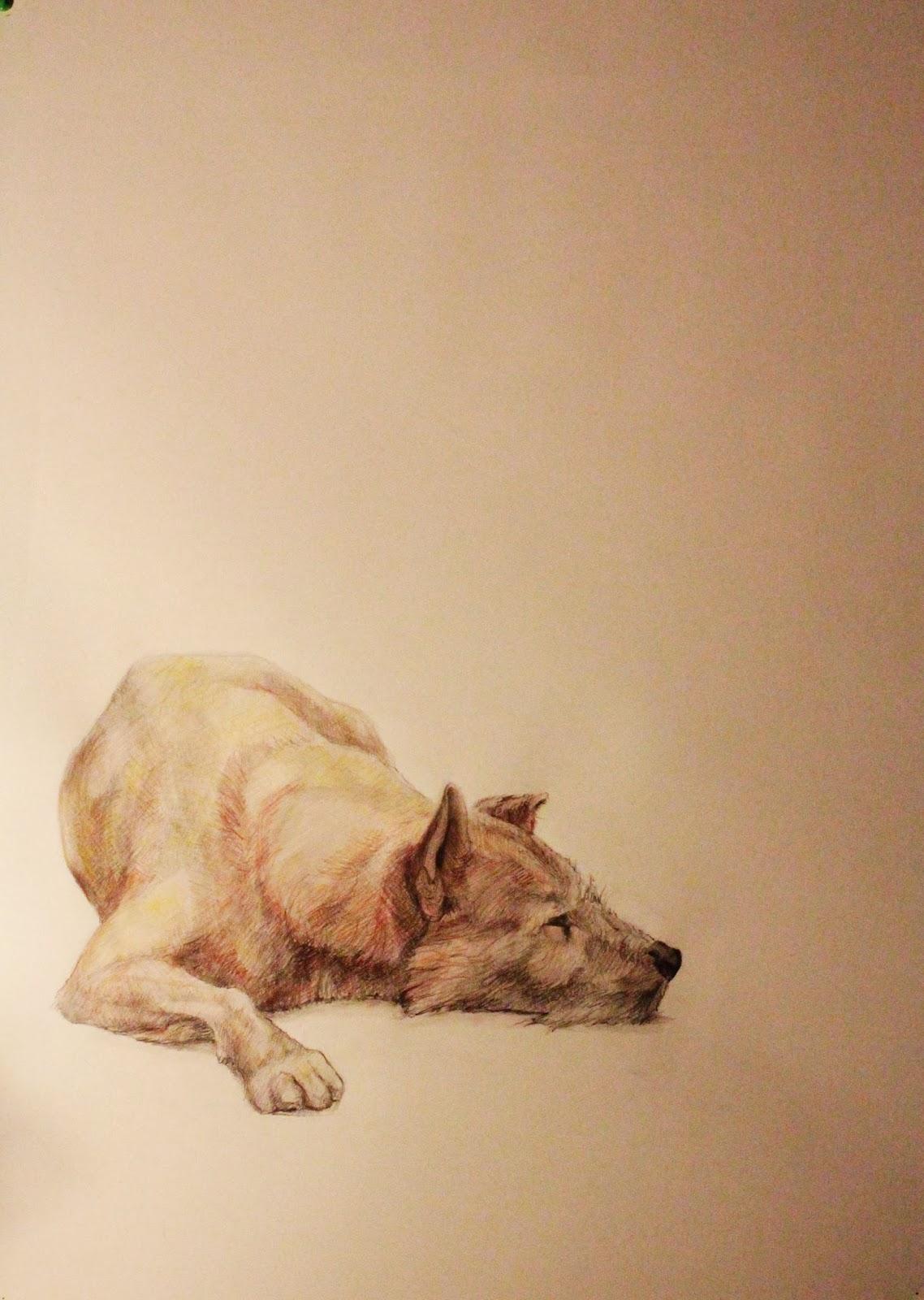 Perro sentado - 14 Enero 2014