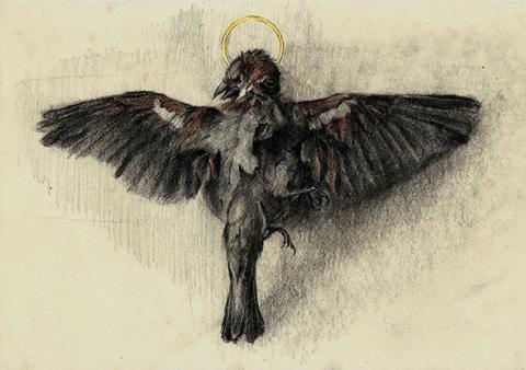Cadáver pájaro